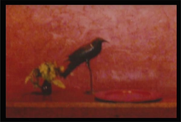 Loft Bird - John Boock