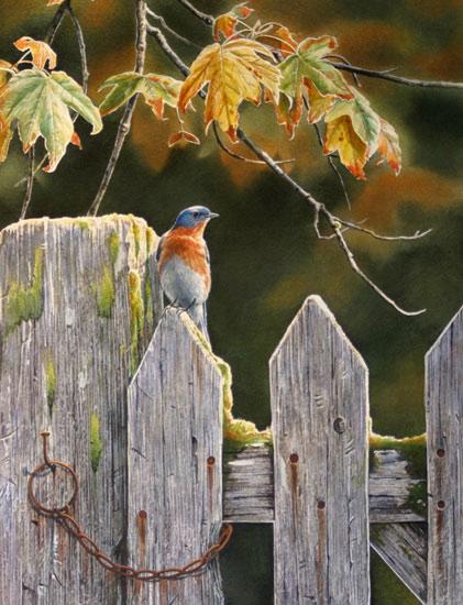 Susan Bourdet - Bluebird