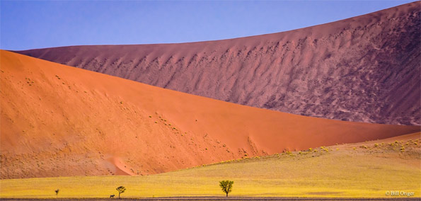 """Dunes, Soussuvlei, Namibia"" by Bill Origer"