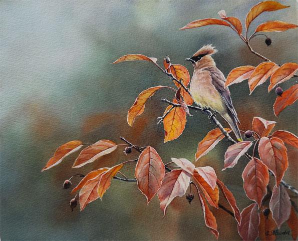 """""""Cedar Waxwing"""" by Susan Bourdet"""